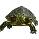 Bob Turtle Profile Picture